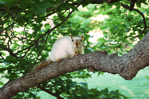 White squirrel on a branch