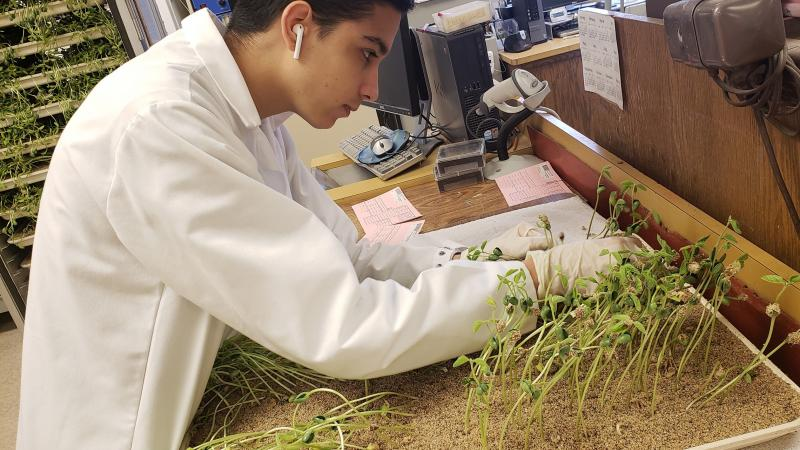 Researcher looking at plat of seedlings in the lab.